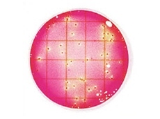 3M Petrifilm Coliform Count Plates indicate microbial levels in foods