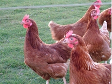 Lutron Test and Measurement Devices for use in Poultry Farming.