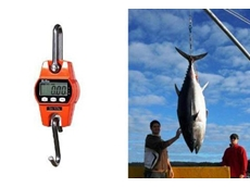 Accuweigh digital crane scales weigh big fish on a charter boat