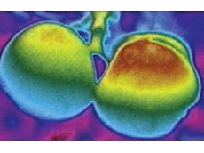Infrared photography showing a Surround Crop Protectant treated apple on the left and untreated apple on the right. Orange/red indicates the hottest area