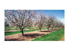 Broad spectrum pre-emergent herbicide for grapes, citrus, pome fruit, stone fruit and almonds