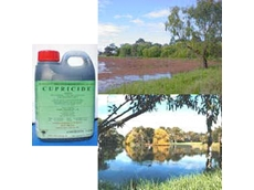 Cupricide - The Affordable Algicide