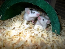 Lessons can be learnt from 2011 mouse plague