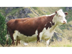Animal Health Direct stocks a comprehensive range of livestock healthcare products for farmers and vets