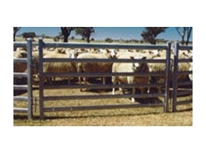 Sheep yards are available with a range of features from Arrow Farmquip