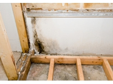 Mould removal and remediation services offered by Asbestos Removal Projects Pty Ltd