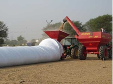 Mechanised equipment is used to fill the bags with grain