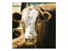 Ruminant nutrition can enhance the effciency of livestock production