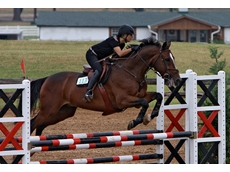 Warmblood horses are renowned for their performance during competition