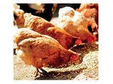 Low Inclusion Level Fibre for Modern Animal Nutrition from BEC Feed Solutions