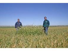 Velocity herbicide