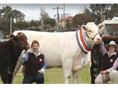 The Beef Shorthorn Society of Australia