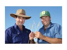 BioAg Fertility Specialist, Andrew Watt, inspects heads left over from the 2005 wheat crop grown by Wayne Brabrook at