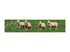 BioAg Pasture Primo