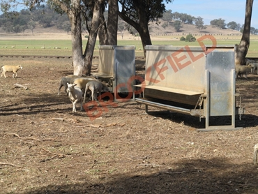 Brookfield Sheep Feeder in use