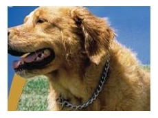 Anti bark collars available from Burpengary Pets & Supplies