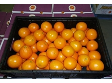 Favco citrus in a CHEP crate
