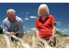 CSIRO researchers, Dr Richard James and Dr Rana Munns, examine a salt-tolerant wheat trial near Canberra. (Image credit – Carl Davies, CSIRO.)