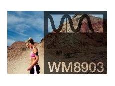 WM8903 Codec