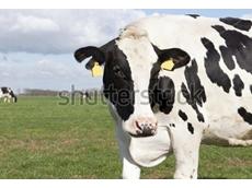 Cattle Council of Australia