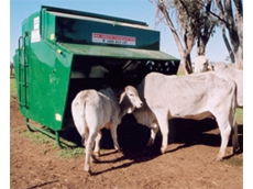 Cattle grain feeders can also be adjusted to accommodate sheep feeding