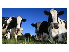 Cattle herd leasing by CowBank