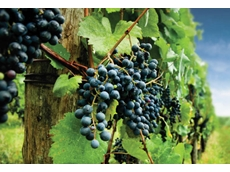 Crop Care winegrapes crop protection