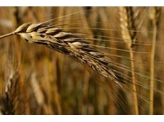 Crop Care's Flutriafol Fungicide