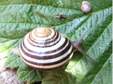 Snails are best controlled as soon as they become active