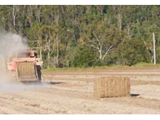 Peanut growers can now use Barrack fungicides to protect crops and use the stubble for grazing and cattle feed