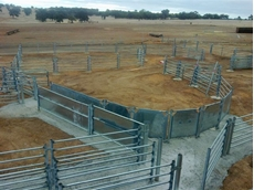 Permanent Sheep Yards from DSY Engineering