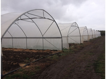 David Gill Greenhouses Crop Cover