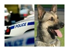 Vehicle interior temperature monitor and control system useful for police units and canine protection