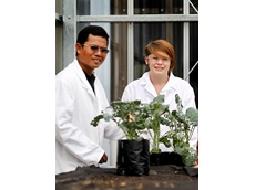 Amy Rose with Somsak Samanwong, a scientist from Thailand, studying the impact of the Diamondback Moth on a broccoli plant