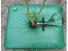 Tree survival with the Eco Bag