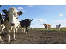 Elanco's Rumensin 100 helps to keep cattle in good health; preventing metabolic and digestive disorders