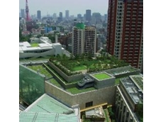 Growing Up rooftop gardens