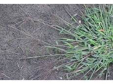 11 tips for using pre-emergent herbicides: DPI