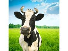 Australian Dairy Farmers criticise milk price cuts