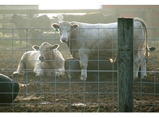 Stress free animal and livestock handling leads to the production of better quality meat