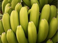 Australia's biggest banana producer expands north