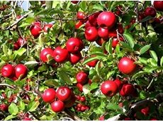 Government talks provide hope for fruit growers