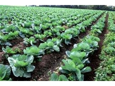 Rising imports hurt Australia's $102 billion food sector
