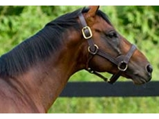 Thoroughbred Breeders Australia represents the six state breeders associations
