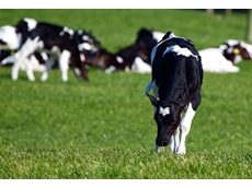 US export subsidy program could impact on Aussie dairy industry