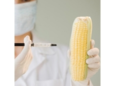 US food companies scramble to source non GM ingredients