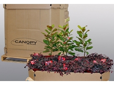 Made from 100% recyclable materials, Amcor's nursery pallet box is designed to protect flowers and plants while in transit