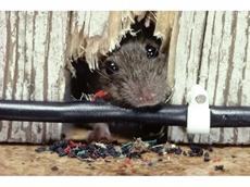 Don't let pest management eat away at you [part 1]