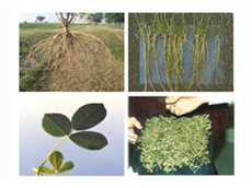 Fodder King's innovative CSG wastewater utilisation plan aims to produce the high yielding legume lucerne
