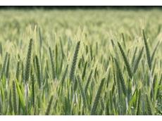Grain Growers Limited (GrainGrowers)